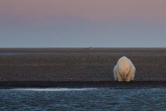 Interview: Photographer Travels to Alaska and Discovers Polar Bears