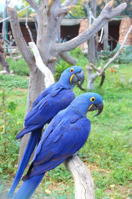 93ed2b94b Attiko Zoo Park in Athens!   Ευ Ζήν Creations   Bloglovin'