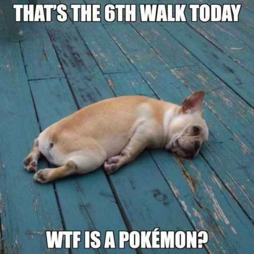Pokemon, Offensive, Hilarious & Dog memes | Posts by sara