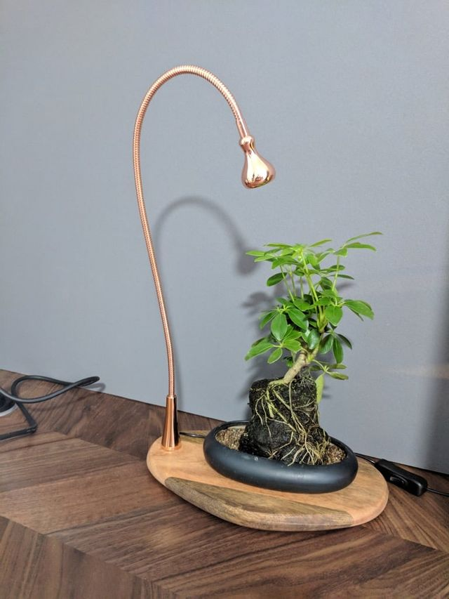 Indoor Plant Needs Light Try This Plant Tray Display With