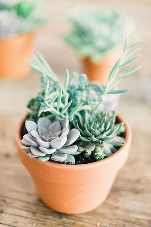 Green thumb the easiest indoor plants to grow in your for Easy to grow indoor plants